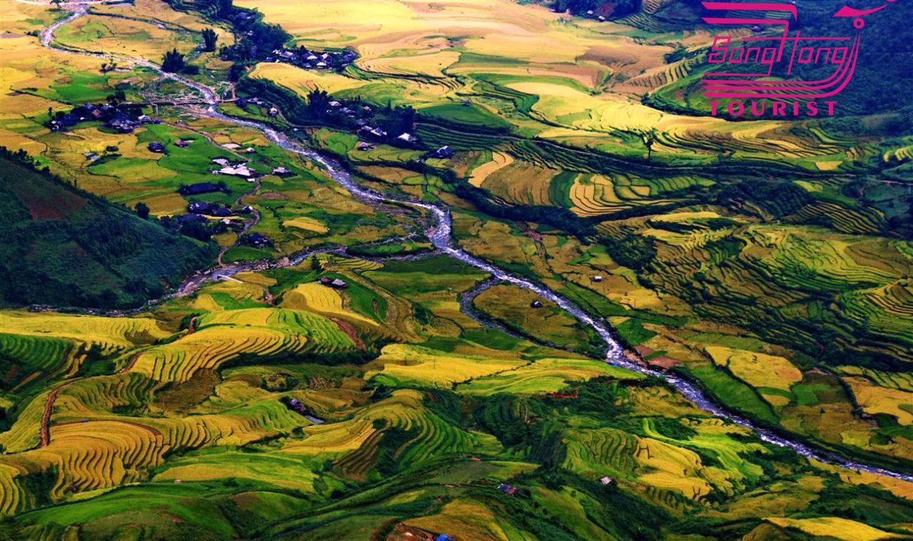 Hình ảnh của Vùng Cao Ý Yên tỏa sáng mùa lúa chín