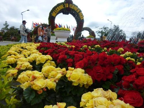 Illustration Tour Du lịch Festival hoa Đà Lạt 3 ngày 2 đêm